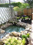 Natural pond design in new york city